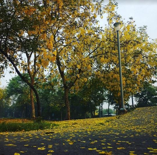 Town Park, Faridabad